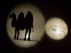Bela kamela, Foto: Boštjan Lah